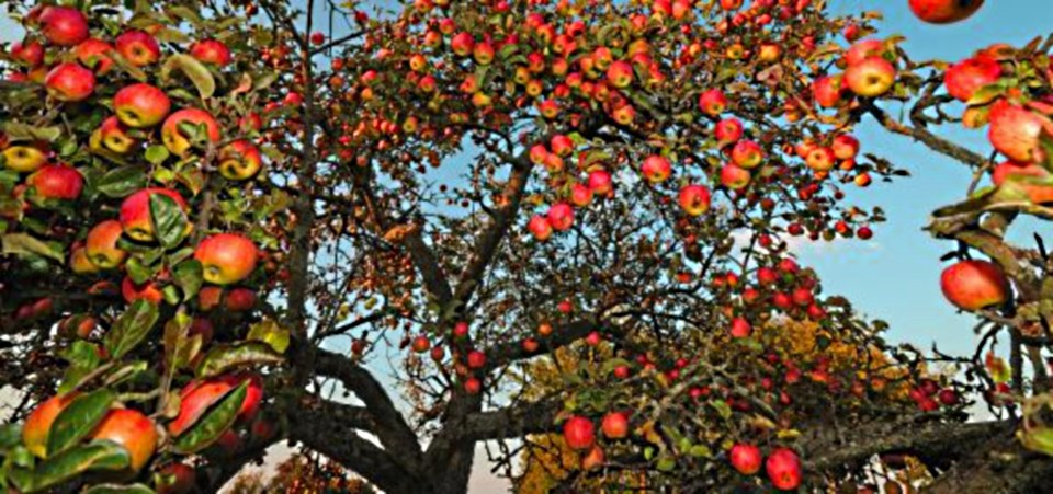 Are you a healthy tree in God's kingdom? | Freedom Keepers